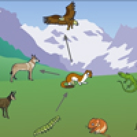 Food Chain Of The Mountain Ecosystem Interactive