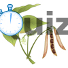 Quiz The seed