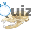 Quiz skulls and dentitions